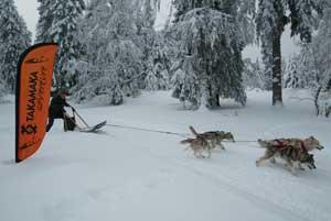 chien de traineau - challenge trappeur grenoble